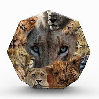 Glückliche Löwen Acryl Auszeichnung