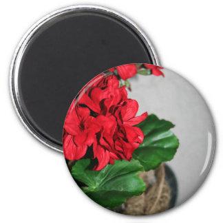 Glückliche Pelargonien Runder Magnet 5,1 Cm