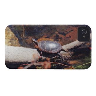 Glückliche Schildkröte iPhone 4 Hüllen