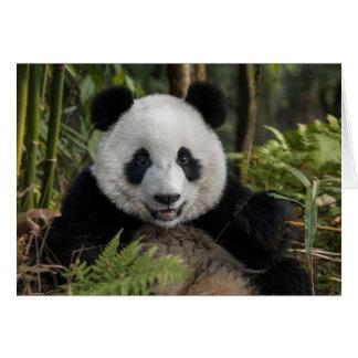 Glücklicher junger Panda, China Karte