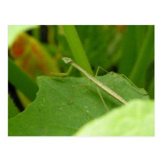 Glücklicher Mantis Postkarte