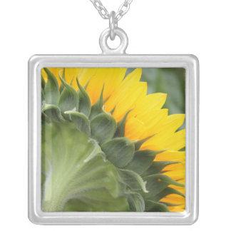 Glückliches gelbes Sonnenblume-Foto Versilberte Kette