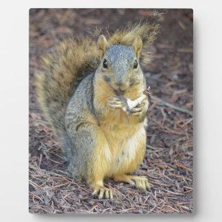 Glückliches hungriges Eichhörnchen Fotoplatte
