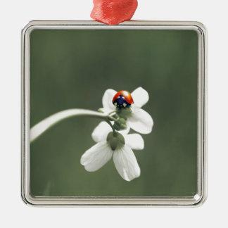 Glücksbringer auf der Blumenwiese Quadratisches Silberfarbenes Ornament