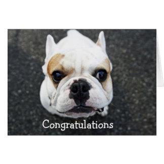 Glückwunsch-Bulldoggen-Gruß-Karte Karte