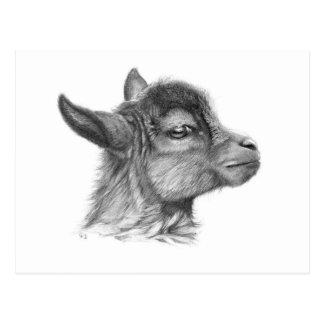Goat Baby G099 Postkarte