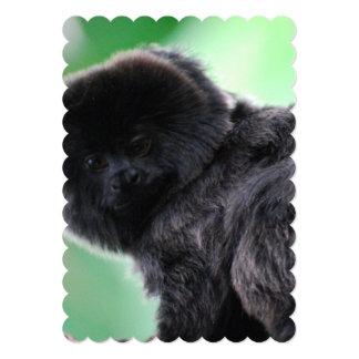 Goeldi Affe Ankündigungen