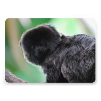 Goeldi Affe Ankündigungskarten