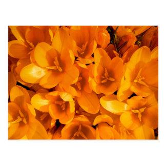 Gold im Garten Postkarte