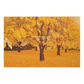 golden autumn with many cherry trees holzleinwand