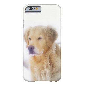 Golden retriever im Schnee Barely There iPhone 6 Hülle