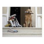 Golden retrieverhund, der an der Haustür sitzt Postkarte