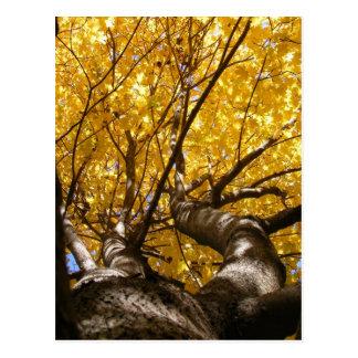 Goldene Ahorn ~ Postkarte