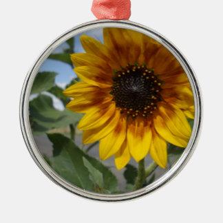 Goldene gelbe Sonnenblume, Silbernes Ornament