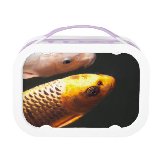 Goldene Koi Fische Brotdose
