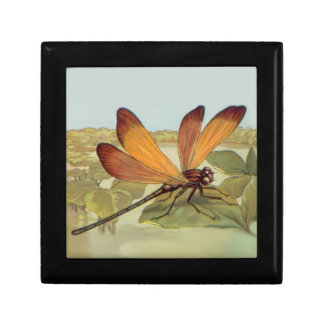Goldene Libelle Geschenkbox