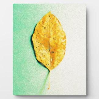 Goldene Minze durch JP Choate Fotoplatte