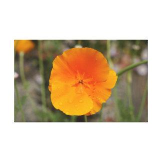 Goldene Mohnblume Kaliforniens dehnte Leinwanddruck