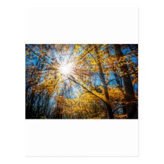 Goldene Strahlen Postkarte