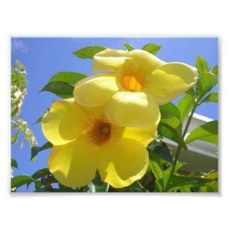 Goldene Trompete-Blumen I Fotodruck