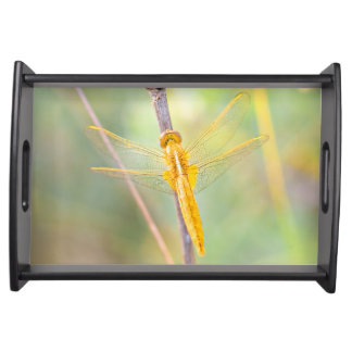 Goldene und gelbe Libelle Tablett