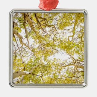 Goldener Aspen-Waldhimmel Silbernes Ornament