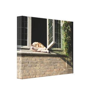 Goldener Hund, der ein Nickerchen im Fenster, Leinwanddruck