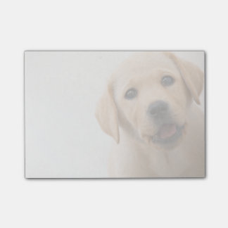 Goldener Labrador-Welpe (8 Monate alte) Post-it Klebezettel