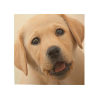 Goldener Labrador-Welpe Holzleinwand