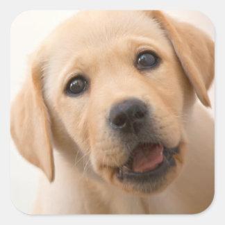 Goldener Labrador-Welpe Quadratischer Aufkleber