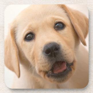 Goldener Labrador-Welpe Untersetzer