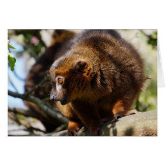 Goldener Lemur Karte
