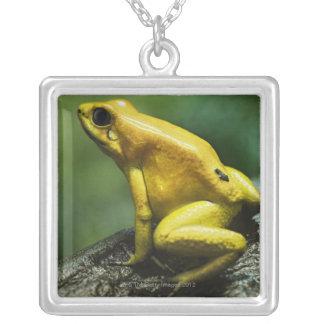 Goldener Pfeil-Frosch Versilberte Kette