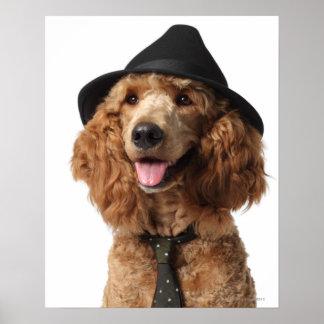 Goldener Pudel-Hundetragender Hut und -Krawatte Poster