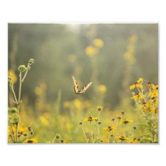 Goldener Stunden-Schmetterling Fotodruck