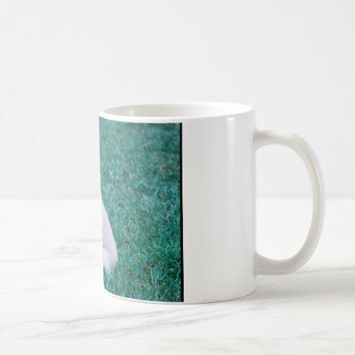Goldener Welpe auf dem Grün Kaffeetasse