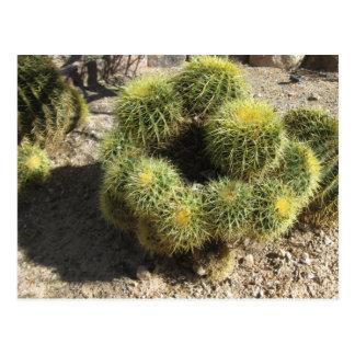 Goldenes Fass-Kaktus Postkarte