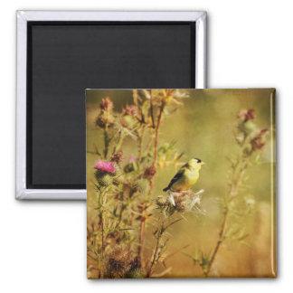 Goldfinch-Foto Quadratischer Magnet