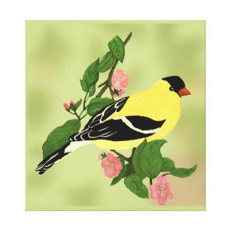 Goldfinch in einem blühenden Kirschbaum Leinwanddruck