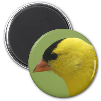 Goldfinch-Magnet Runder Magnet 5,7 Cm