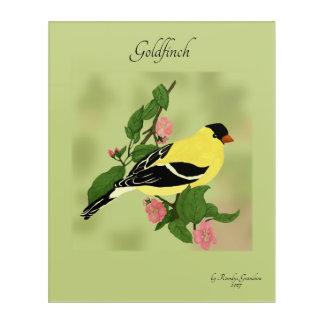 Goldfinch, wilder Kanarienvogel Acryldruck