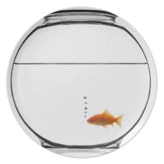 Goldfisch in der Schüssel Flacher Teller