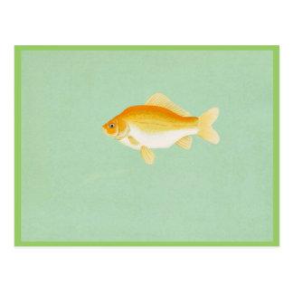 Goldfisch Postkarte