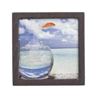 Goldfisch-Sprung Kiste