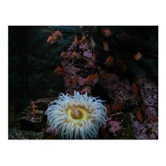 Goldfische und Seeanemone Postkarte
