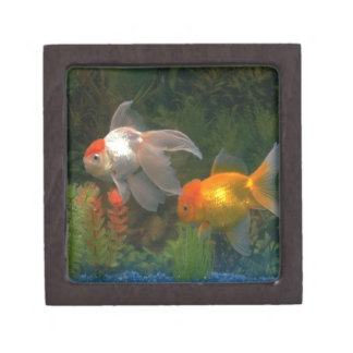 Goldfishing Kiste