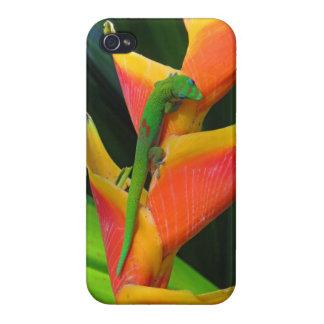 GoldstaubGecko auf Heliconia iPhone 4 Case