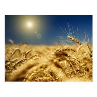 Goldweizen und blauer Himmel mit Sonne Postkarte
