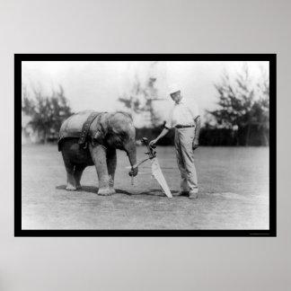Golfspieler-und Elefant-Transportgestell in Miami, Poster