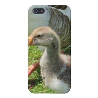 Goosy Gosling iPhone Fall Hülle Fürs iPhone 5